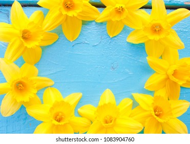 Yellow fresh flowers on a wooden blue background
