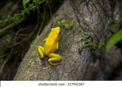 Yellow frog at the Butterfly Palace in Branson, Missouri