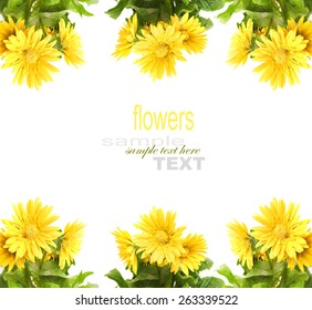 Yellow Gerber with copy space isolated on white
