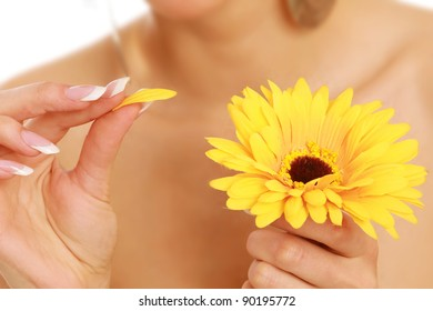 Yellow gerbera in female hand.
