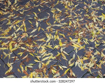Yellow and gold leaves on wet city sidewalk in autumn