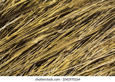 yellow and gold Wheat pattern wallpaper background abstract concept. Rural enviroment