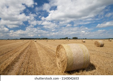 Straw Stubble Images Stock Photos Vectors Shutterstock