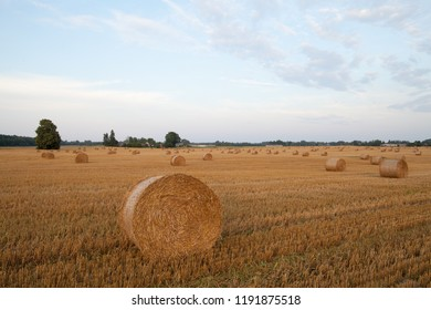 Wheat Stubble Images Stock Photos Vectors Shutterstock