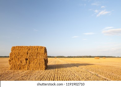 Yellow golden bales of wheat hay straw stacked in a heap in stubble field on a summer evening in Bauska area, Latvia