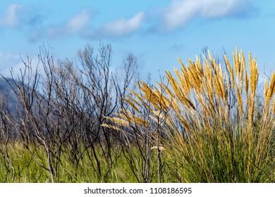 Yellow grass leaves growing in Van Stadens Wildflower Reserve