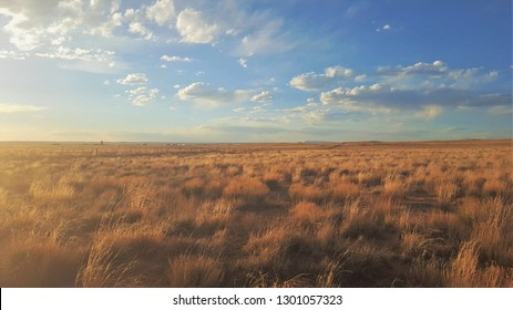 Yellow grassland illuminated with afternoon sunlight on a  clear bright day at Petroglyph National Monument in Albuquerque, New Mexico