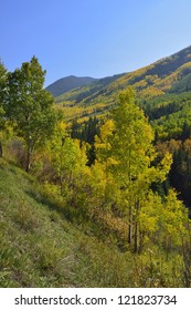 yellow and green aspen in the mountains of Colorado during foliage season