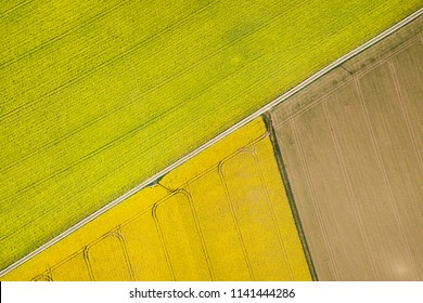 Yellow and Green Canola Field seen from above