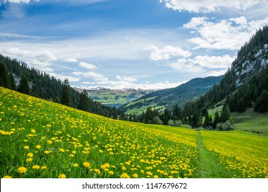 Yellow and Green Dandelion Field and Snowy Mountains with Blue sky and Clouds