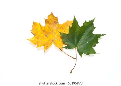 Yellow and green fall leaves on white, isolating background