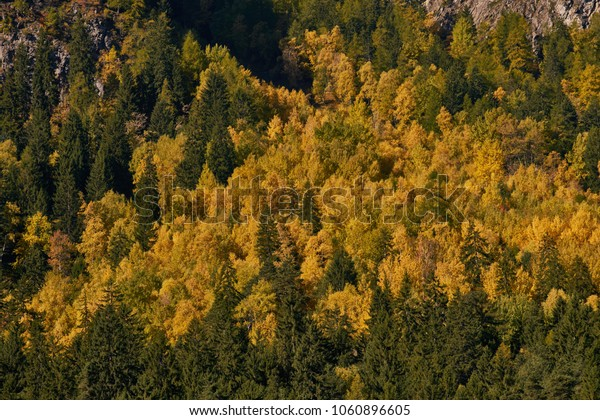 Yellow and green immersive texture of woods in autumn scenary