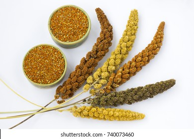 Yellow, green and red ears of millet. Grain millet. White background
