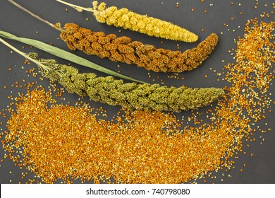Yellow, green and red ears of millet. Grain millet. Black background