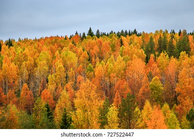 Yellow and green trees in autumn forest, Karelia, Russia. View from above.