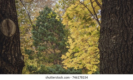 Yellow and green trees between two trees trunks in autumn park