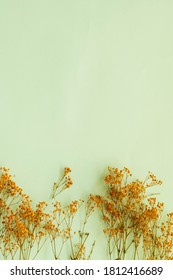 Yellow gypsophilia paniculata branches (Baby's breath) on soft green background with copy space for text