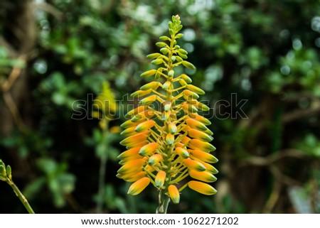 Yellow Hanging Flowers Stock Photo Edit Now 1062271202 Shutterstock