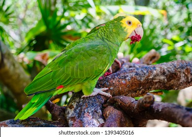 Yellow headed parrot perched on a tree branch