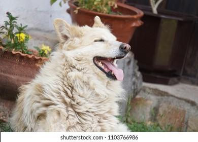 Yellow homless dog
