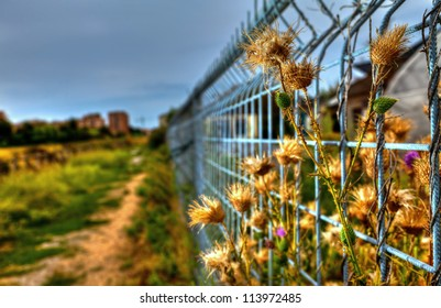 Yellow imprisoned flowers coming out of the metal fence