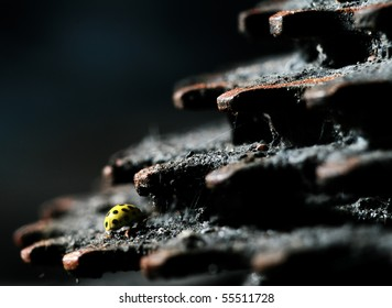Yellow insect on rusty metal