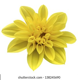 Yellow isolated flower