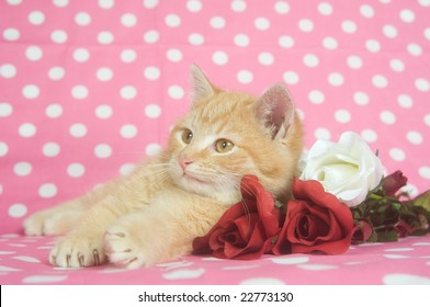 A yellow kitten lays on red and white artificial roses on a pink polka dot background.