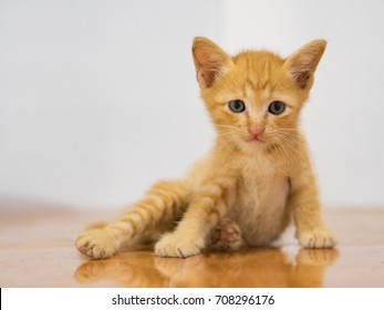 yellow kitten on the floor with white wall