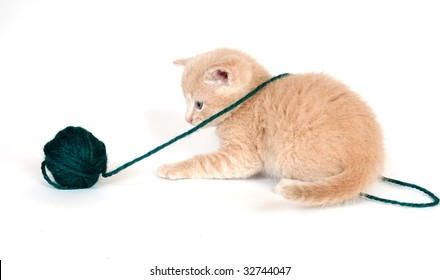 A yellow kitten playing with a ball of yarn on white background