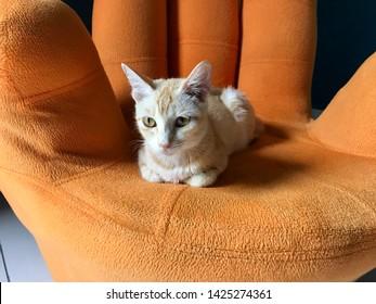 A yellow kitten relaxing on a yellow hand chair - Shutterstock ID 1425274361