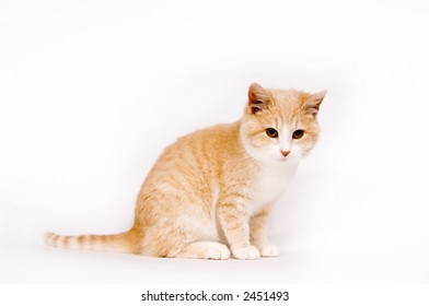 A yellow kitten rests on a white background