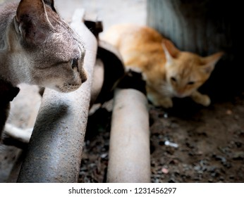 The Yellow Kitten Struck into The Area of The Tabby Cat , Background Blur