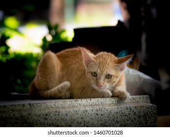 The Yellow Kitty Feared Someone Lying on The Table