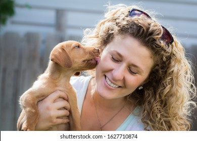 Yellow labrador puppy licks woman's face as she smiles while holding him