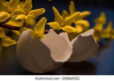 yellow laburnum on a dark background