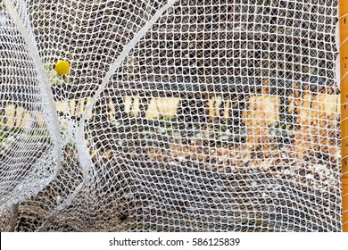 Yellow lacrosse ball thrown into the goal