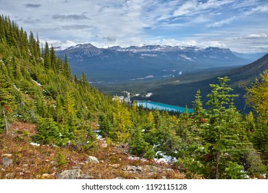 Yellow larches in Autumn above Lake Louise in Banff National Park, Alberta, Canada