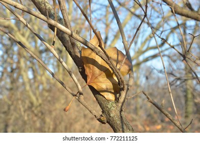 Yellow leaf between naked tree branches at sunny day in park