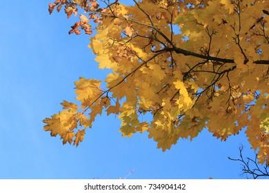 yellow leaf fall season