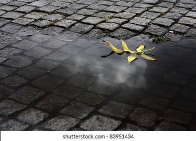 Yellow leaf floating in a water puddle after some heavy rain. The reflection of a cloud can still be seen on the water.