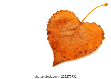 Yellow leaf heart isolated on white background