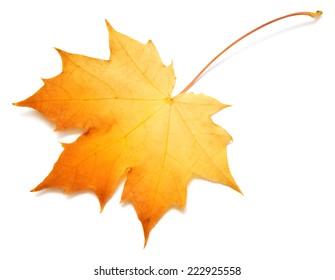 Yellow leaf isolated on white background