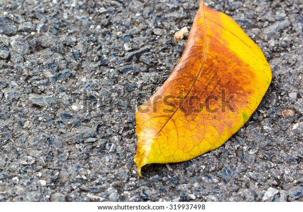 Yellow Leaf lays on dark asphalt road. Macro photo