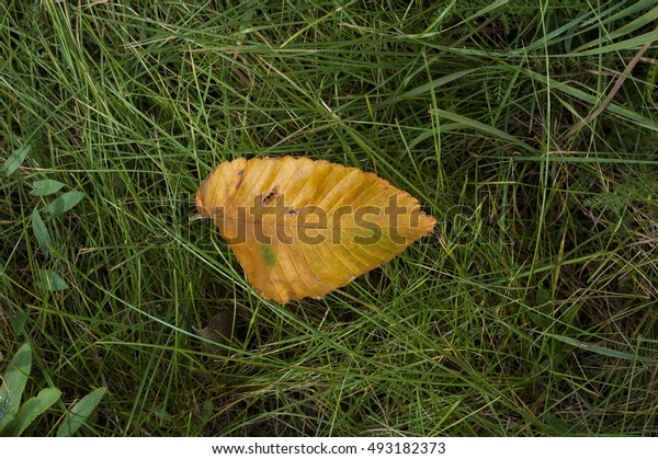 Yellow leaf lies on the surface in the fall.