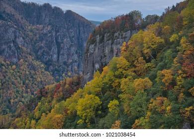 Yellow leaf mountain