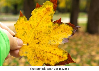 Yellow leaf on an autumn day