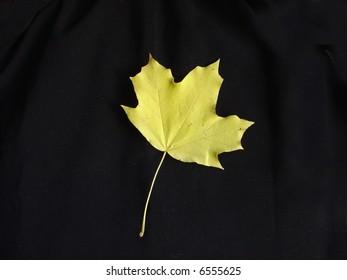 yellow leaf on black