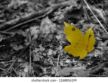 Yellow Leaf on a Black and White Background