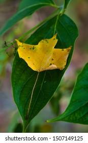 Yellow leaf on green leaf